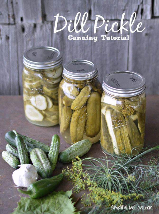 Dill Pickle Canning Tutorial for a crunchy, spicy dill pickle from SimplifyLiveLove.com