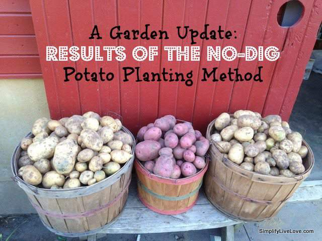 No-dig Potato Planting Method