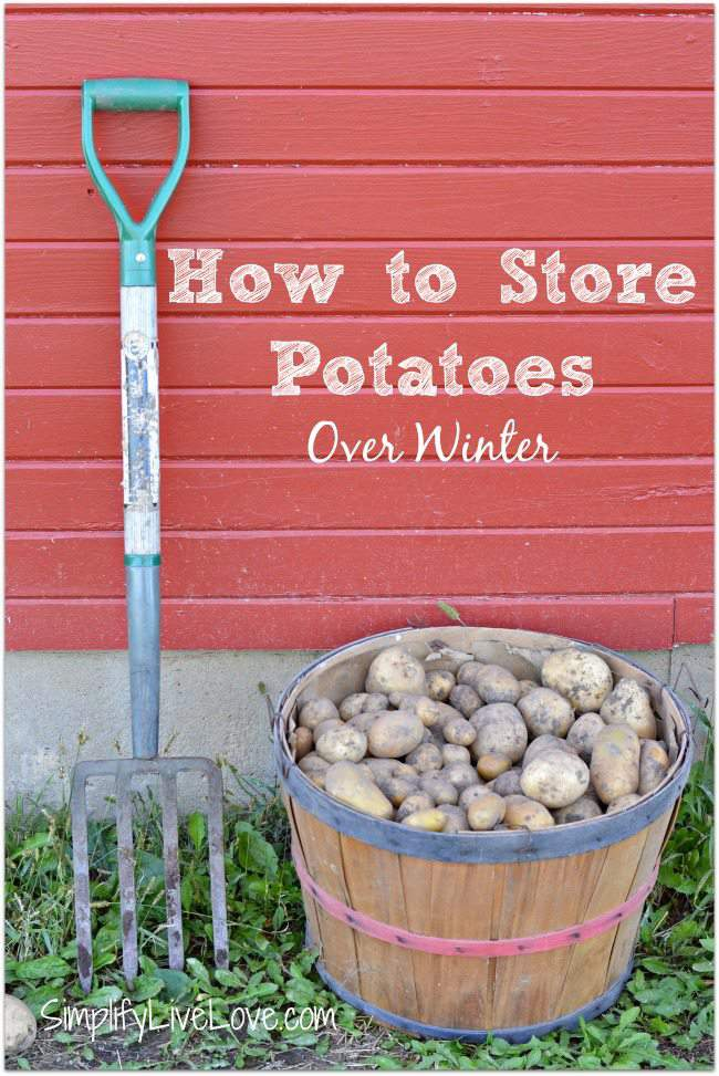 How to store potatoes over winter