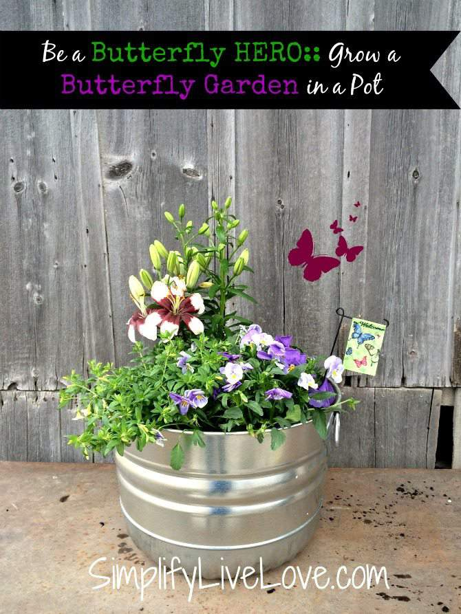 Be A Butterfly Hero   Grow A Butterfly Garden In A Pot #ad #Monrovia