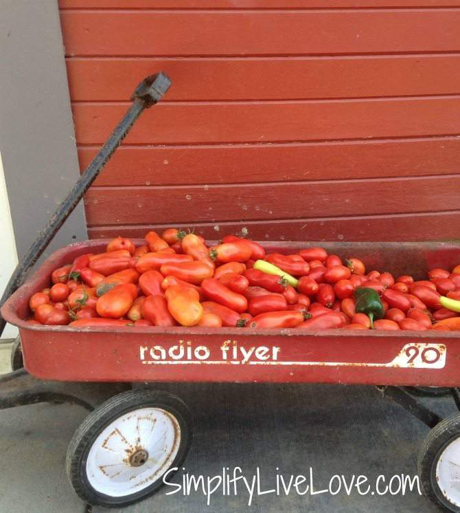 How to Make Strong & Effective Tomato Cages  - DIY Tutorial - wagon full of tomatoes from {SimplifyLiveLove.com}