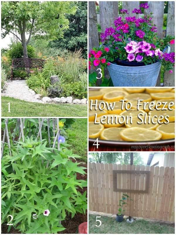 Tuesday Garden Party Features 7-7-15