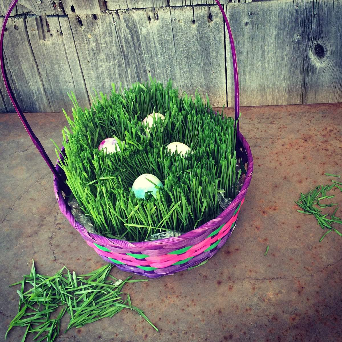 Grow Your Own Easter Basket Grass with this tutorial. You only need a few days!
