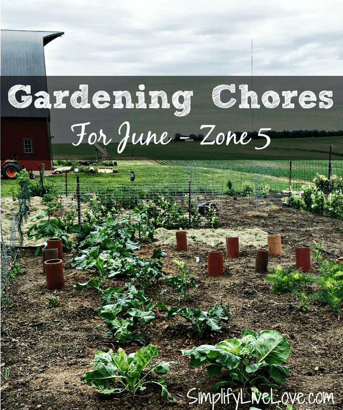 Gardening chores for June, Zone 5. It's not too late to plant a garden, even if you haven't started yet. Check out what to plant and do in June in this helpful post.