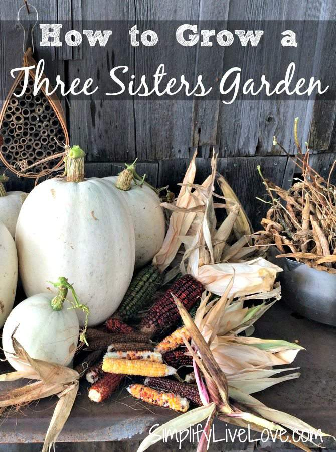 How to grow a three sisters garden simplify live love Sisters garden