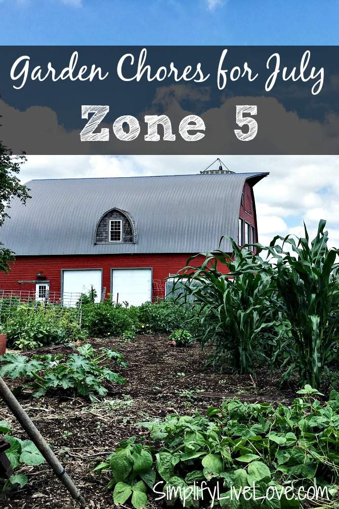 Garden Chores for July in Zone 5