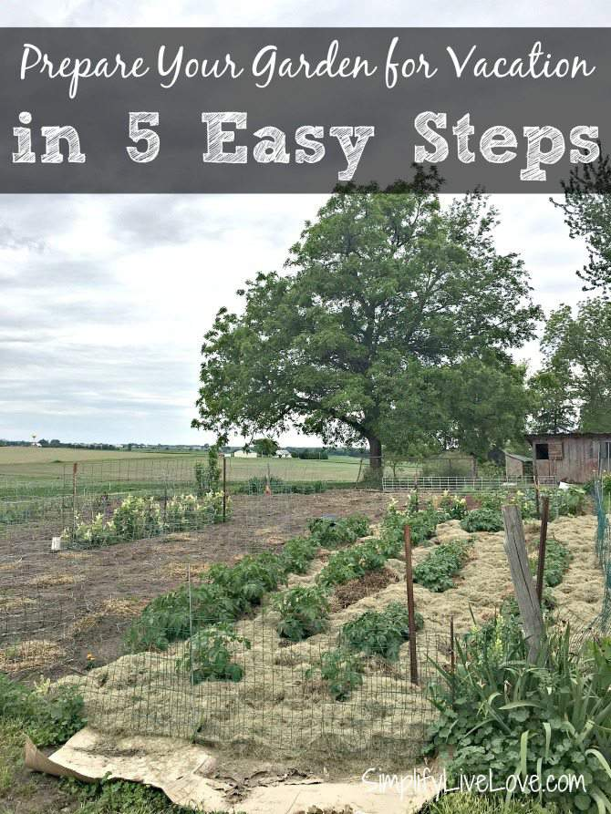 Prepare your garden for vacation in 5 easy steps