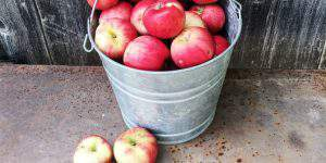 Caring for Fruit Trees Organically: 5 Things You Must Do
