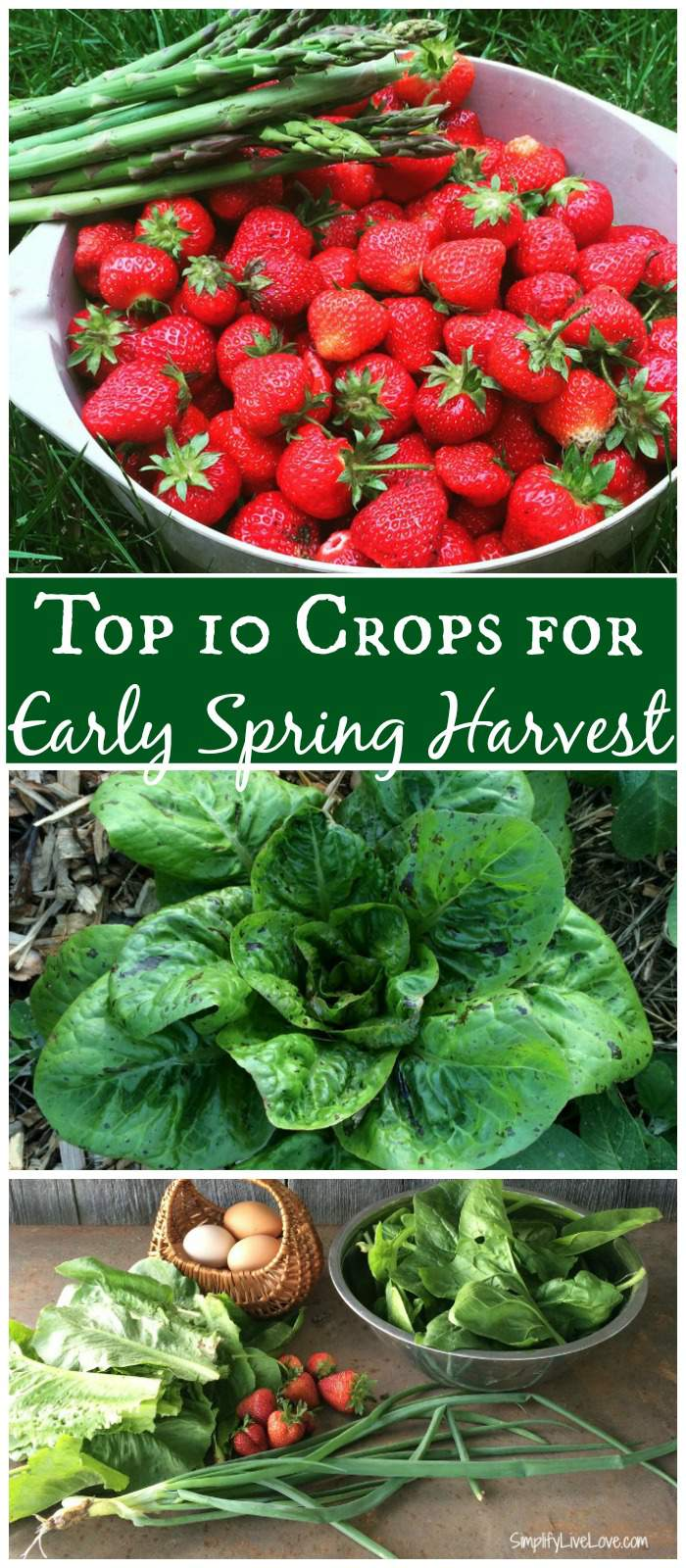 Top 10 Plants for Early Spring Harvest
