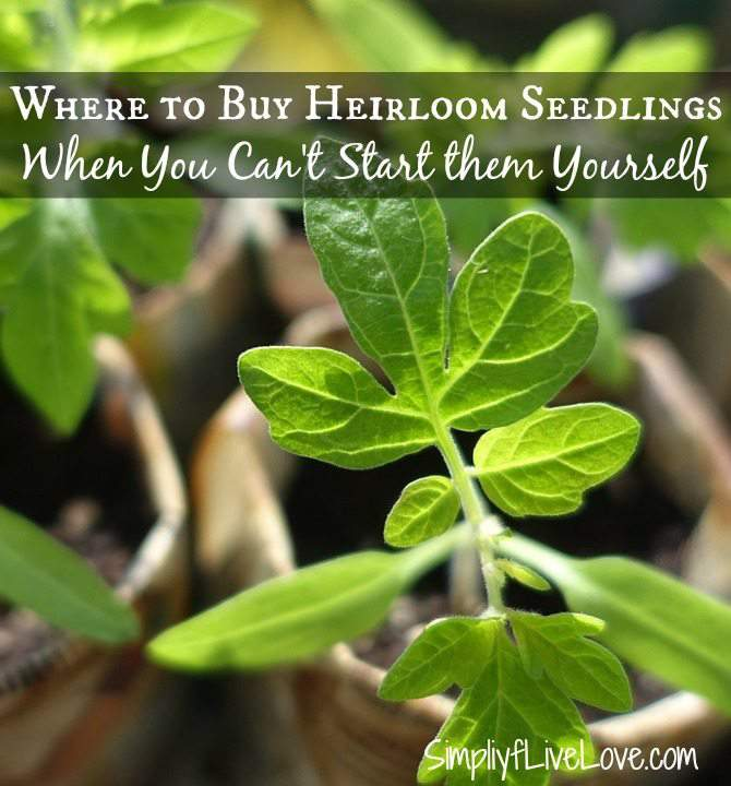 Where to buy heirloom seedlings when you can't start them yourself