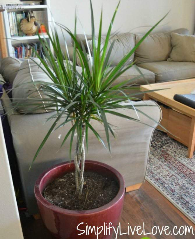 Add house plants to filter your indoor air