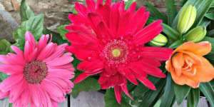 Grow a Beautiful & Colorful Cutting Flower Container Garden!