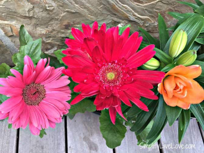Colorful Cutting Flower Container Garden