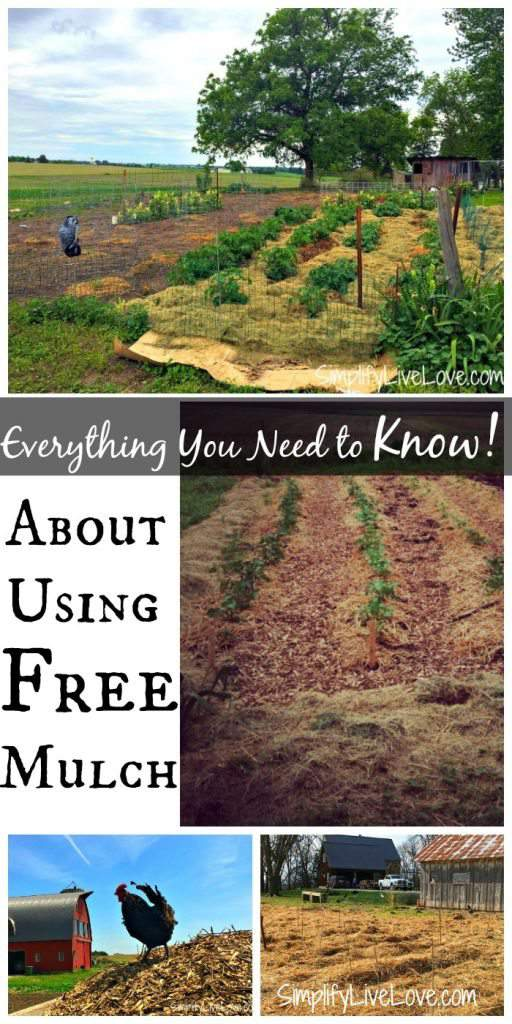 You can save a lot of money on your garden by using free mulch. Here are a few things to think about and places to help you find free mulch for your garden!
