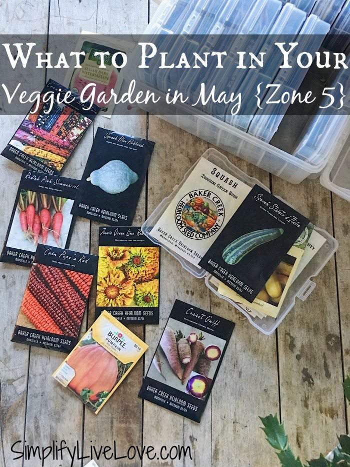 What to Plant in Your Veggie Garden in May - Zone 5
