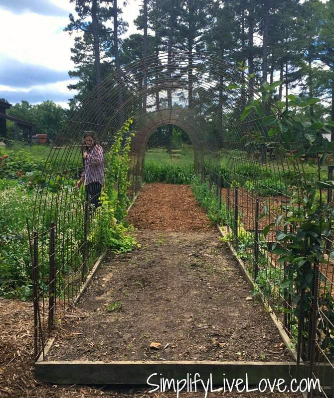 hog panel trellis at moss mountain farm