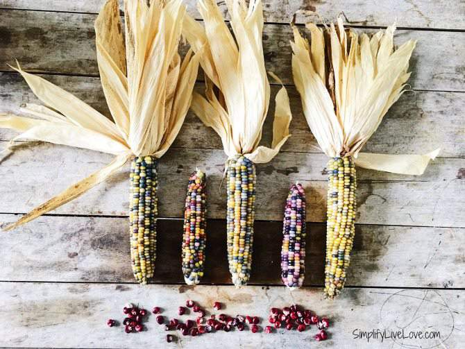 grow ornamental corn to give as gifts