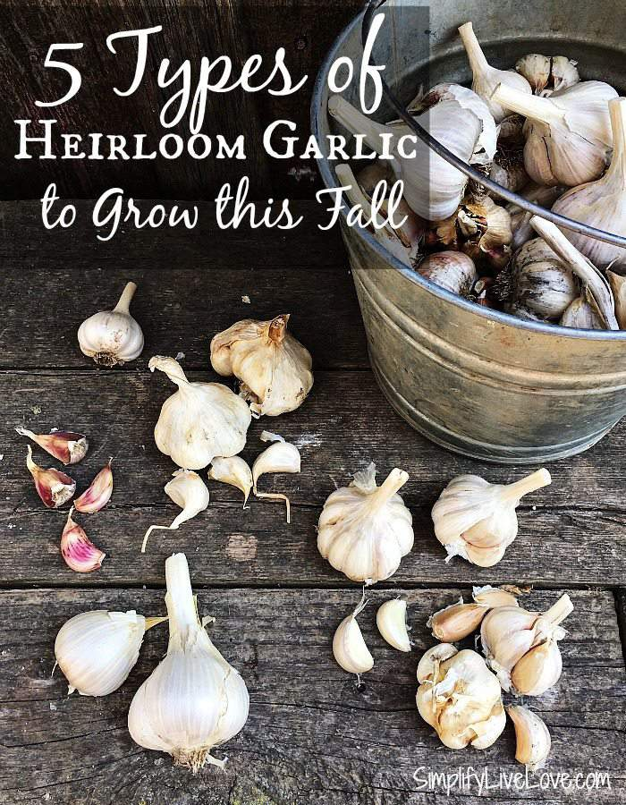 5 Types of Heirloom Garlic to Grow this Fall