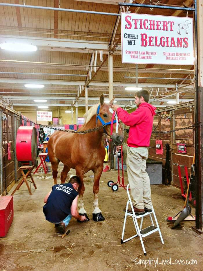 Check out the horses in the horse barn and the Minnesota State Fair