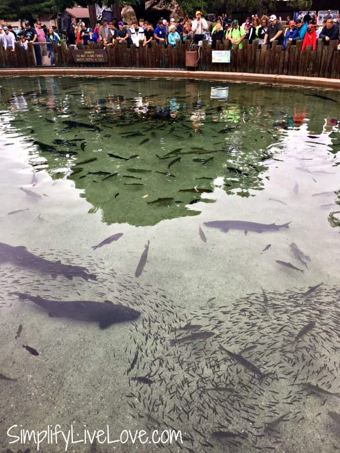 DNR's fish pond at the Minnesota State Fair
