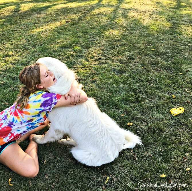 Use positive reinforcement to train Great Pyrenees